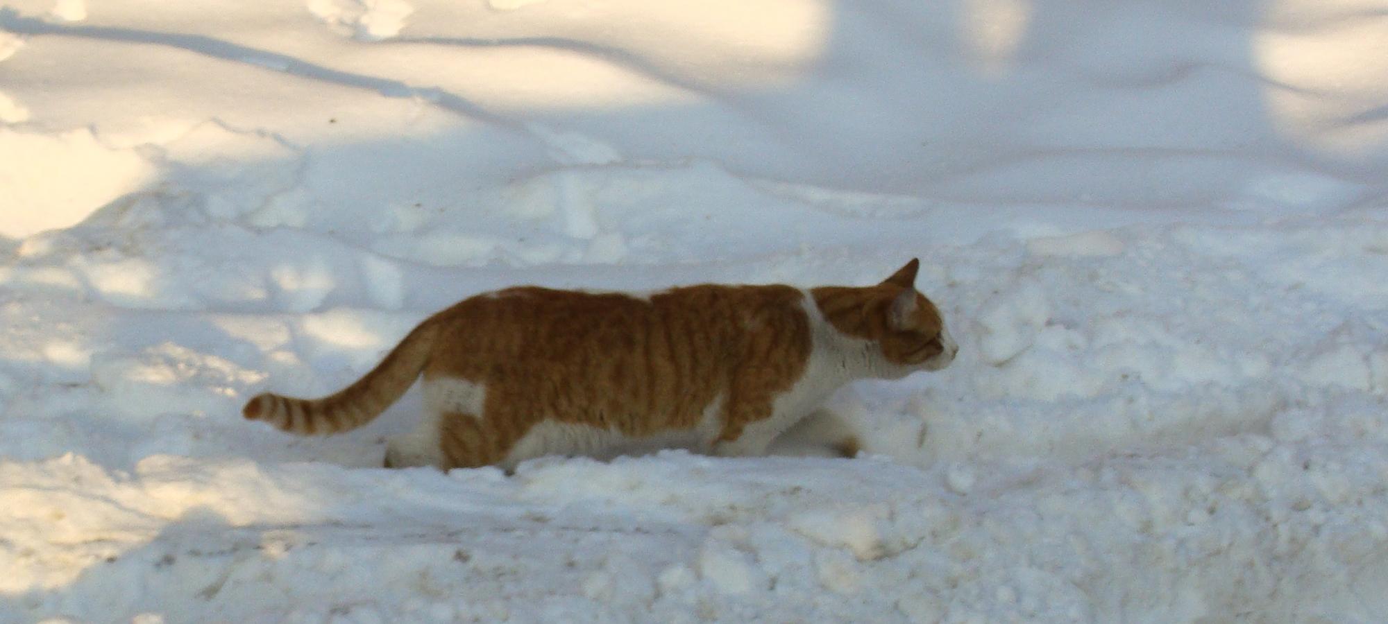2017-cat-slider